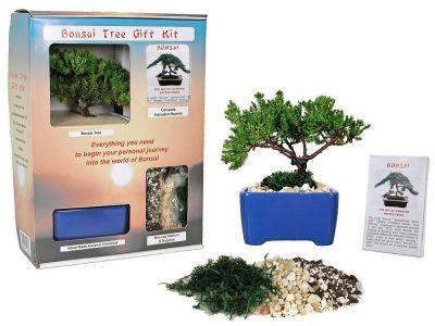 Eve's Garden Bonsai Starter Kit