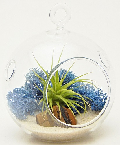 Blue Moss Mini Air Plant Terrarium Kit