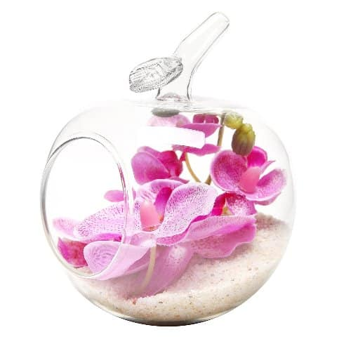 Apple Shaped Air Plant Glass Terrarium