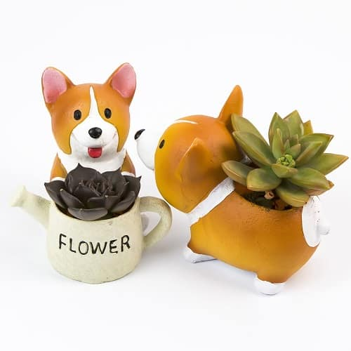 Corgi Succulent Decor | College Girl Birthday Gifts