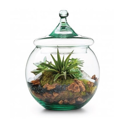 Glass Globe Terrarium Kit