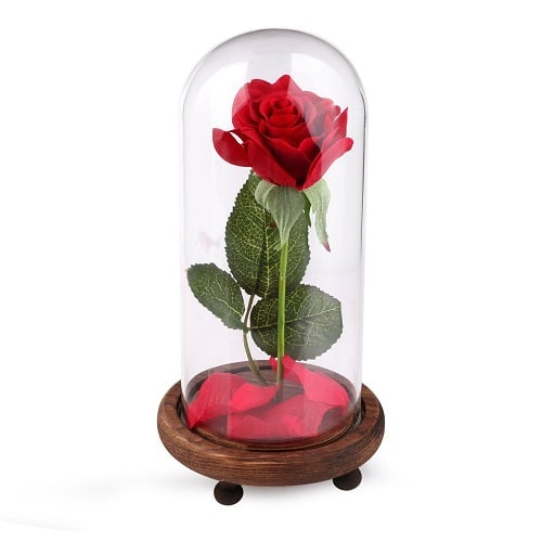 """Beauty and the Beast"" Rose in a Glass Dome"
