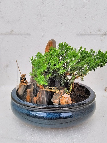 Juniper Tree Bonsai with Zen Garden