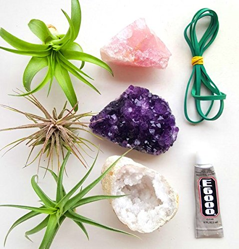 Air Plant Crystals Kit | gifts for best friends