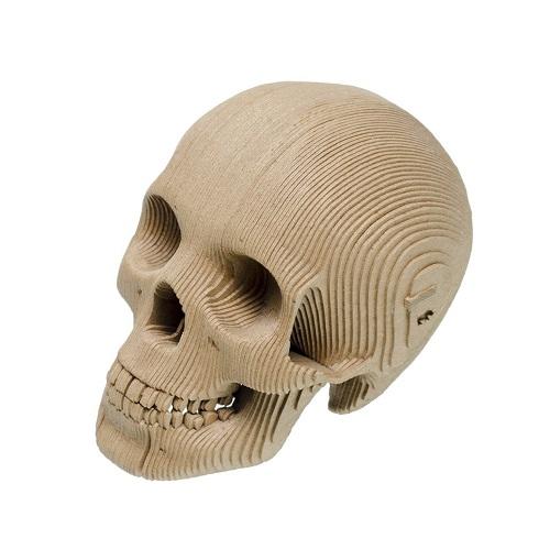Cardboard Skull 3D Model