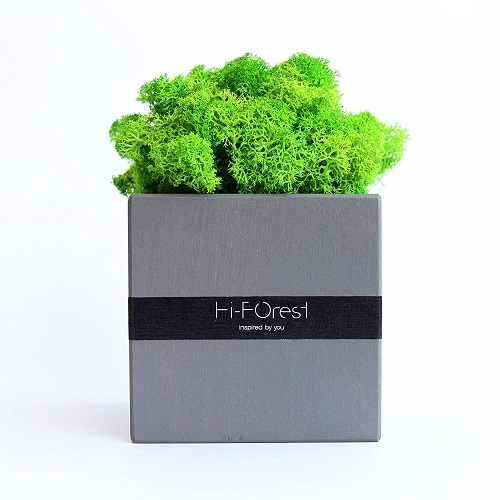 Moss Cube Room Decor Plants